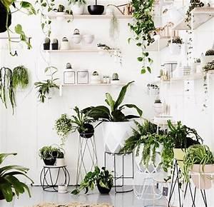 Plantes Pour Chambre : plantes de chambre great blouissant plante dpolluante chambre a propos de plante chambre pour ~ Melissatoandfro.com Idées de Décoration
