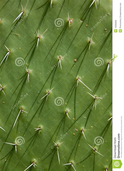cactus texture stock photo image  coloured background