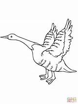 Goose Coloring Fly Away Flying Geese Drawing Canada Printable Getdrawings Supercoloring sketch template