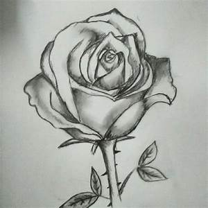 rose flower sketch pencil on Instagram