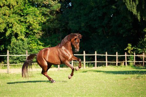 aminosaeuren zum muskelaufbau beim pferd ehorses magazin