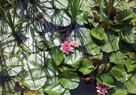 Japanischer Garten Erlangen by Gartengestaltung Im Raum Erlangen Forchheim Und