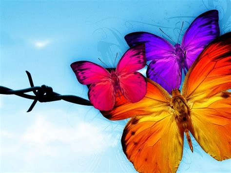 Beautiful Animated Butterfly Wallpapers - beautiful butterfly wallpaper wallpaper