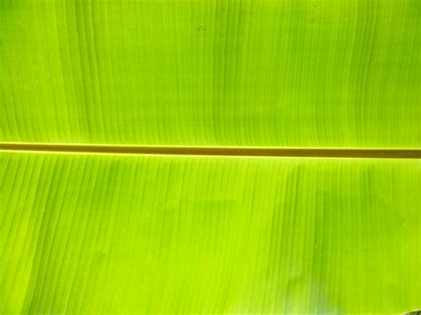 banana leaf backgrounds pixelstalknet