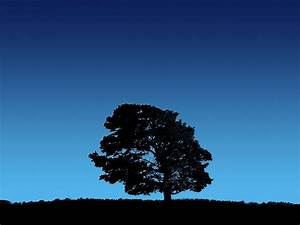 Tree, On, Blue, Sky, Wallpapers