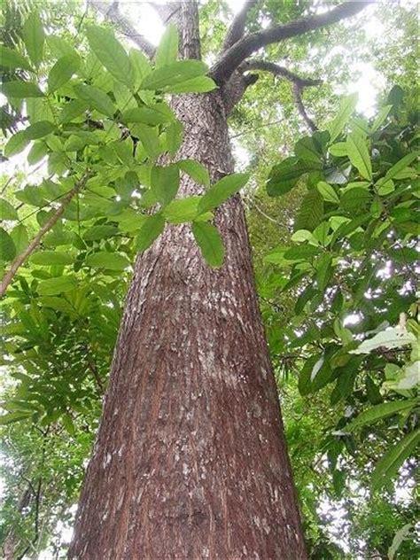 Camaru Wood