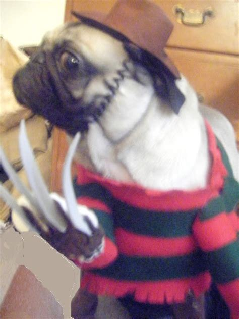 dogs dressed  freddy krueger riot daily