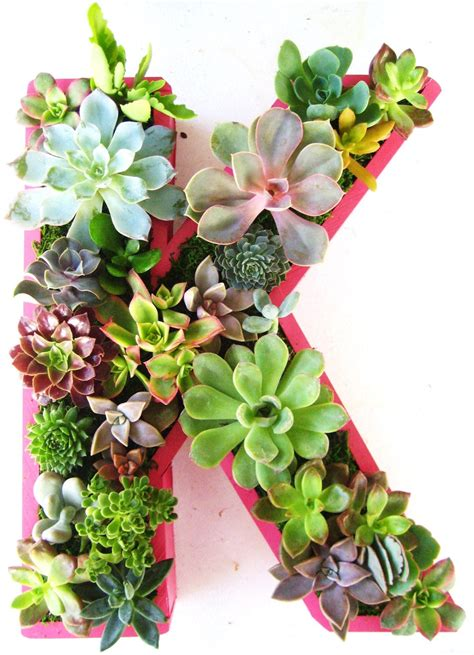 succulent planter monogrammed  numbers  rootedinsucculents