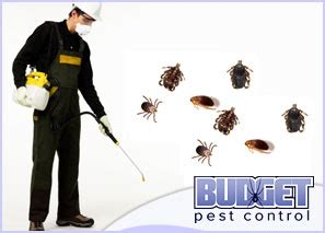 Pest Control Service In Denver Co By Budget Pest Control. Jeep Dealership Portland Dell Laptop Touchpad. Dropbox For Business Security. Social Media Monitoring Company. Best Monitor Calibration Software. Colorado Online Schools K 12. Online Universities Chicago Bos Credit Card. Flammable Cabinets Requirements. Certification For Nurse Practitioners