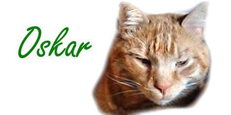 Struvitsteine Katze Homöopathie