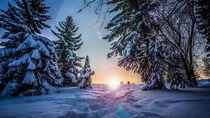 Snow Winter Sunlight Path Trees Widescreen