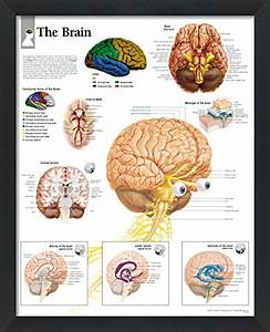 Compare Price To Brain Diagram Poster