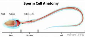 What Factors Affect Sperm Color   With Pictures