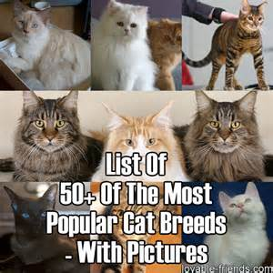 most popular cat breeds list of 50 of the most popular cat breeds with pictures