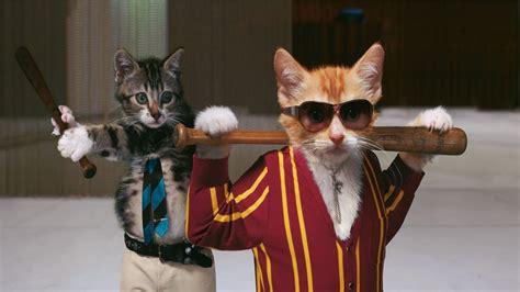 hd wallpaper cat glasses baseball bat
