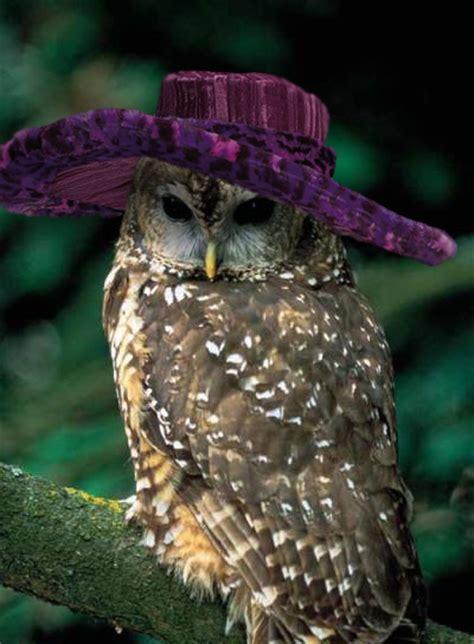 hats  birds