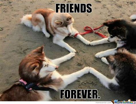 Friends Forever Meme - best friends forever very funny best friends meme picture for facebook