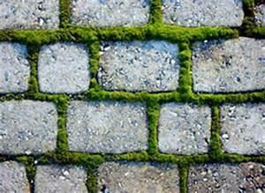 Terrassenplatten Reinigen Beton : pflastersteine reinigen schritt f r schritt anleitung ~ Michelbontemps.com Haus und Dekorationen