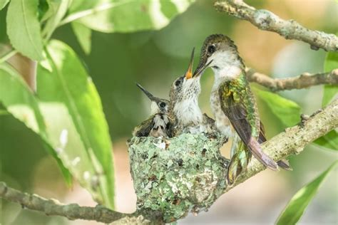 8 Different Kinds of Bird Nests and How to Spot Them - Birds and Blooms