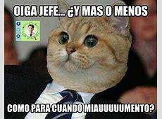 Usuarios celebran con memes el día internacional del gato