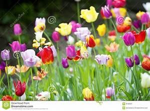 Tulpen Im Garten : viele tulpen im garten stockbild bild von gras blatt ~ A.2002-acura-tl-radio.info Haus und Dekorationen