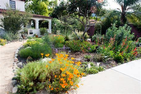 succulents  favorites   california native