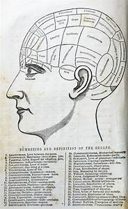 Book Find  Phrenology  A Seemingly Silly Vintage Science