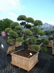 fruhjahrsputz im heimischen garten mit dem richtigen With französischer balkon mit garten bonsai baum
