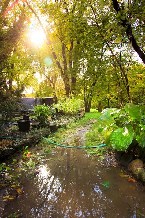 waterlogged  flooded gardens