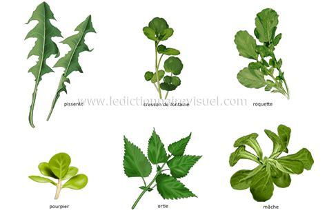 jeux de cuisine salade alimentation et cuisine gt alimentation gt légumes gt légumes