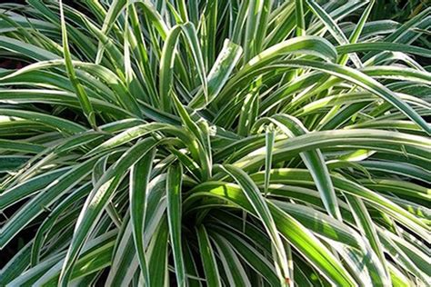 les meilleures plantes d int 233 rieur pour votre sant 233