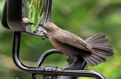 whos  pretty boy  birds fascination