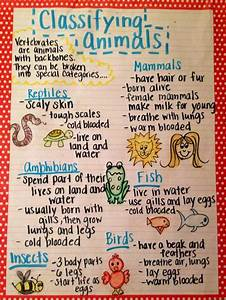 The Animal Classification Anchor Chart I Made For My First