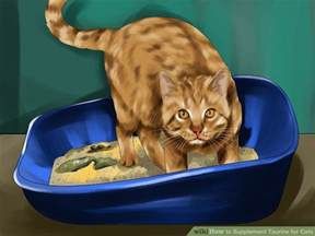 taurine for cats how to supplement taurine for cats 10 steps with pictures