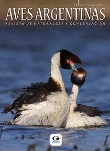 Revista Aves Argentinas / Naturaleza y Conservacion 34 by Aves Argentinas issuu