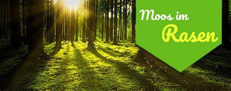 Pilze Im Rasen Kalken by Moos Im Rasen Entfernen Kalk Rasen Gras With Moos Im