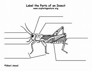17 Best Images About Kindergarten Insects On Pinterest