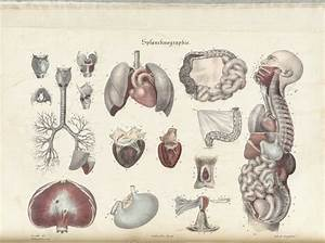 Historical Anatomies On The Web  Jean