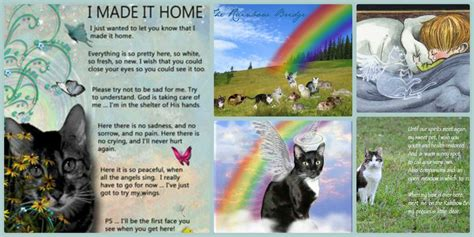 the rainbow bridge poem for cats rainbow bridge for cats she made it home green pets
