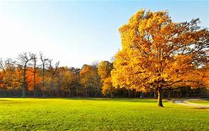 Garden, Landscape, Nature, Panorama, Autumn, Trees
