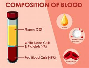 Red And White Blood Cells Diagram