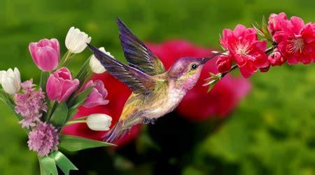hummingbird  spring birds animals background