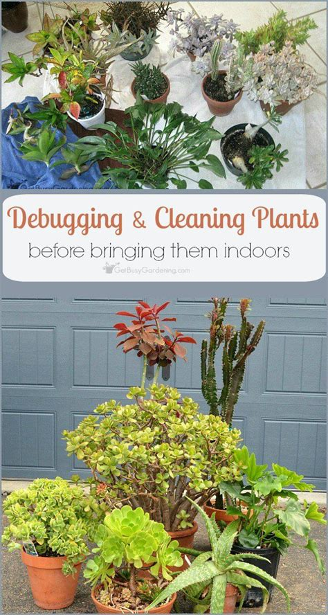 when to bring plants inside 50 best images about indoor plants on pinterest the bug garden pests and garden insects