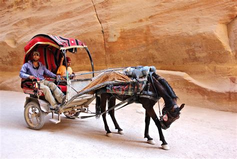 Horse And Chariot Pictures To Pin On Pinterest Thepinsta