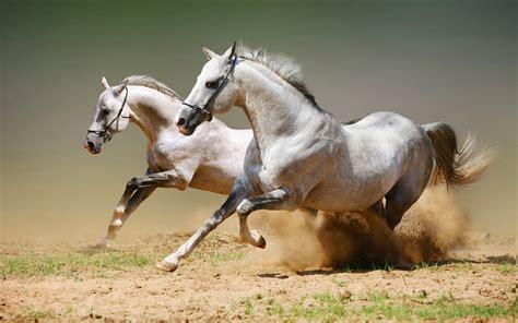 Hd Pferde Hintergrundbilder