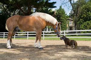 Meet Big Jake and Thumbelina: The tallest and smallest ...