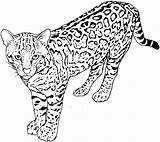 Coloring Pages Cat Leopard Cats Colouring Sheets Spotted Adult sketch template