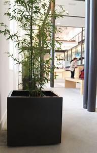 Jardiniere Sur Roulette : jardini re en fibre ciment bacs indoor sur roulettes by image 39 in by atelier so green design ~ Farleysfitness.com Idées de Décoration