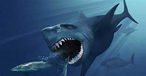 Stay Out of the Water: Does a Prehistoric Shark Still Live ...
