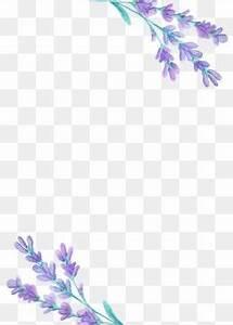 Beautiful Lavender, Lavender, Purple, Flower PNG ...
